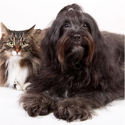 A importância de levar o seu pet a uma clínica veterinária de Itapecerica da Serra