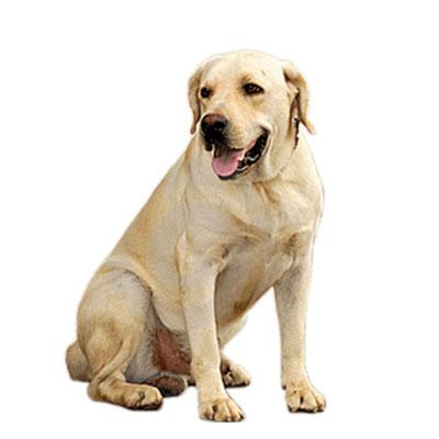 A importância do veterinário Itapecerica da Serra na vida do pet!