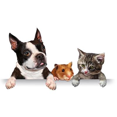 Agilidade no atendimento é especialidade de veterinário 24 horas Carapicuíba