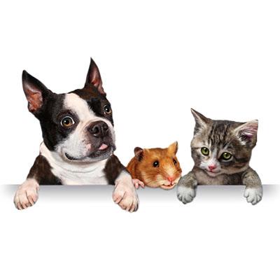 Com que frequência devo levar meu pet à clínica veterinária Capão Redondo?