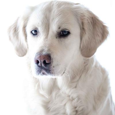 Cuide do seu pet como ele merece: conheça a melhor Clínica veterinário Carapicuíba