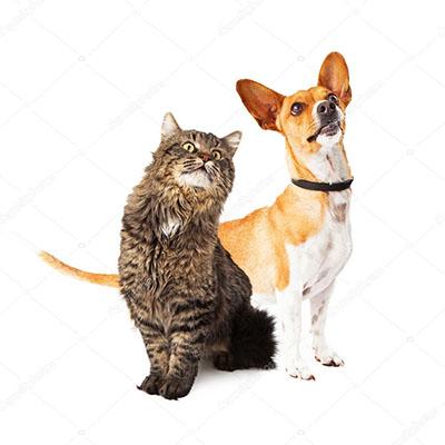 Dicas para melhorar a experiência do seu pet em uma clínica veterinária Taboão da Serra