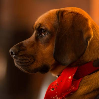 Dr. Pet: conheça o novo centro Veterinário 24 horas Carapicuíba com atendimento domiciliar do seu pet!