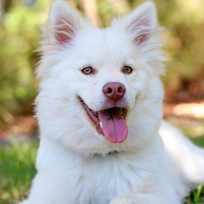 Porque levar meu animal de estimação à uma clínica veterinário Carapicuíba?